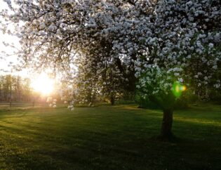 Top Tips on Your New Bright Green Spring Lawn Care
