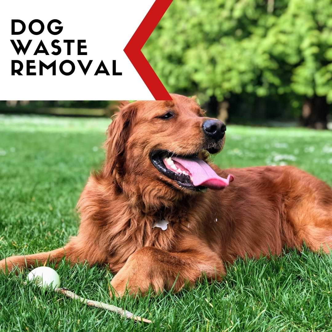 Yard Hero Dog Waste Removal Services